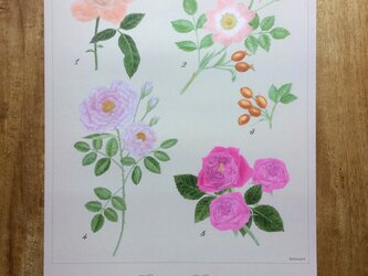 Roses posterの画像