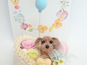 お花で作ったトイ・プードル「こんにちは赤ちゃん」の画像