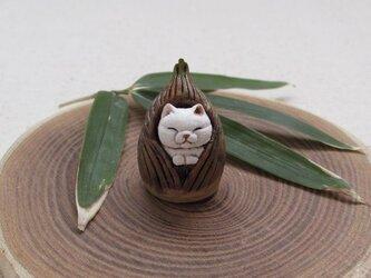 小さな筍猫の画像