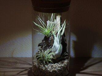 bottle terrarium 95の画像