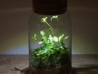 bottle terrarium 75の画像