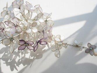クリスタルオーロラの紫陽花(かんざし)の画像