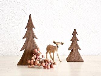 小さなもみの木の画像