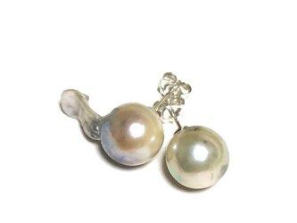 大粒バロックのアコヤ真珠のピアス(SV925、アコヤ真珠)の画像