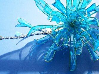 青い菊(かんざし)の画像