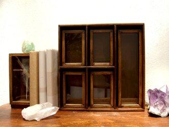 標本箱と棚のセットその弐。の画像