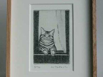 窓から猫が/銅版画 (額あり)の画像