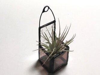 ステンド調エアプランツバケット cube(ミニ)パープル No,2347の画像