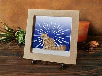 猫 *花火* 茶トラちゃん編の画像