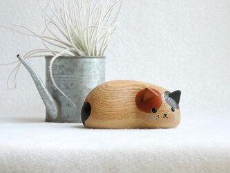 三毛猫(ナチュラル)の画像