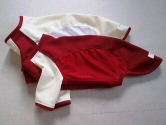 犬服 e様オーダーメイド品ウィペット用Tシャツ2枚セットの画像