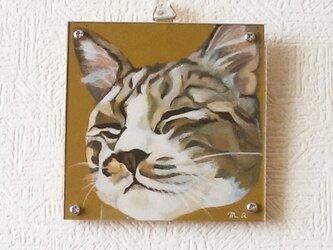 猫イラスト「マルコ目を閉じて」原画(アクリル板つき)の画像
