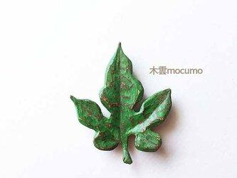 クスノキのブローチ *ツタの葉* の画像
