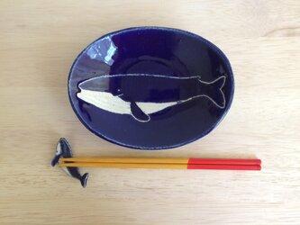 ナガスクジラのオーバルプレートの画像