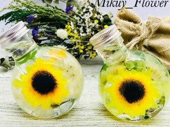最高級ハーバリウム〜sunflower yellow〜の画像
