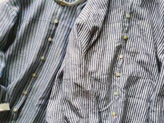 nemophilaシングルストライプの画像
