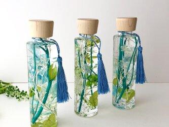 グリーンのハーバリウム【herbarium】の画像