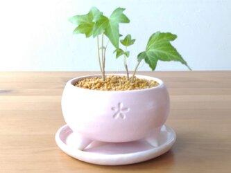 桜色の植木鉢の画像