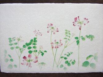 絵葉書「蓮華咲く」の画像