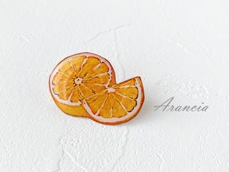 シトラス兄弟(オレンジ)の画像