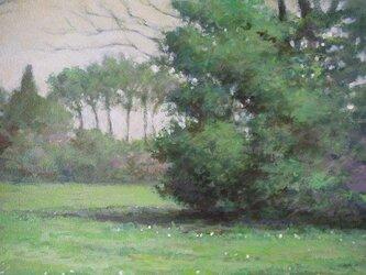 木々のささやきの画像