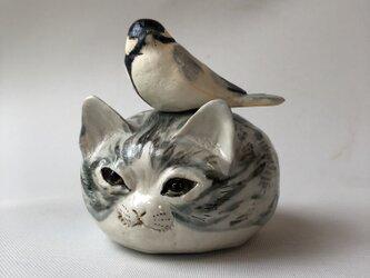 猫に托卵 シジュウカラの画像