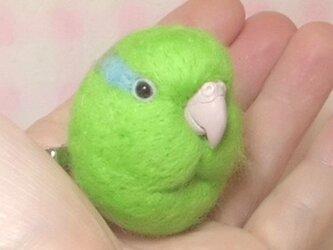 マメルリハ 羊毛フェルト 小鳥マカロン(?)選べる2タイプ(マグネットまたはブローチ)☆クチバシの色相談可能の画像