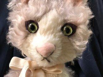 猫のミントの画像