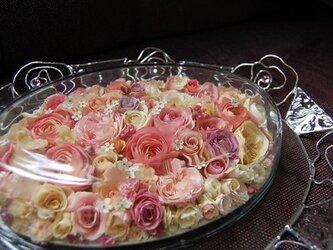 薔薇 の画像