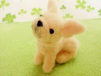 【オーダーメイド】羊毛犬*マスコット*Sサイズの画像