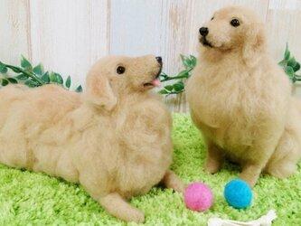【オーダーメイド】羊毛犬*Lサイズの画像