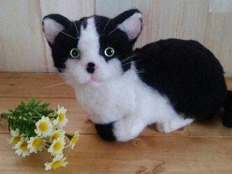 【オーダーメイド】羊毛猫*Lサイズの画像