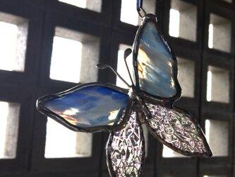 青と虹色の蝶の画像