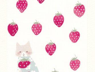 「こねこのイチゴ摘み」ポストカード2枚セット  〇カードNO.1801の画像