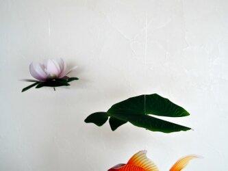 スイレン鉢の金魚の画像