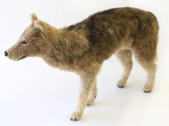 【ご依頼品】羊毛フェルト オオカミの画像