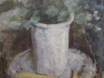 観葉植物とバナナの画像