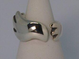 Bird ringの画像