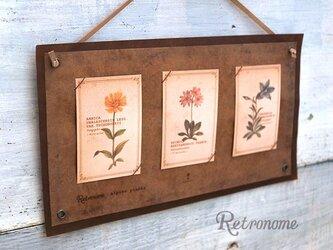 インテリアにもなる*植物の図鑑風メッセージカードの画像