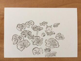 絵葉書/ポストカード <猫と蓮>の画像