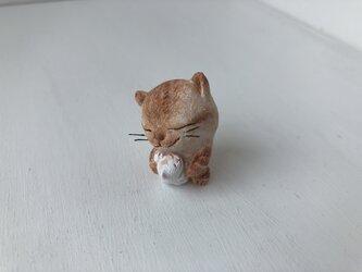 逢いたかった猫さんの画像