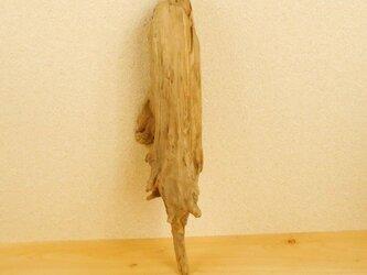 【温泉流木】幹から根元の流木 流木素材 インテリア素材 木材の画像