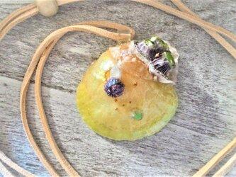 【sale】蓄光☆ナミマガシワとフジツボの封入標本ネックレスの画像