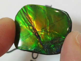 化石が産んだ宝石 美しいベルベットグリーンカナディアンアンモライト ルース  23x19.5mmの画像