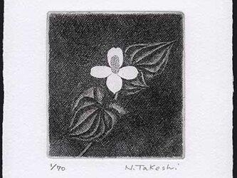 白い花・2018B/ 銅版画 (作品のみ)の画像