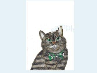 [A¥480] ポストカード¥3枚set :018番 「ネコ」の画像