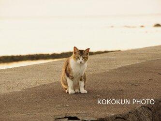海辺のネコ(ポストカード5枚セット)の画像