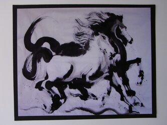 夫婦馬2009の画像