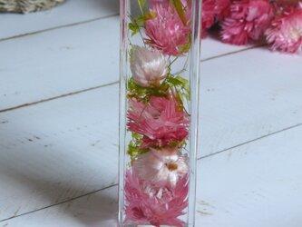 【送料無料】ハーバリウム シルバーディジー(ピンク)の画像