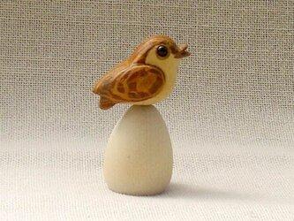 小鳥5の画像